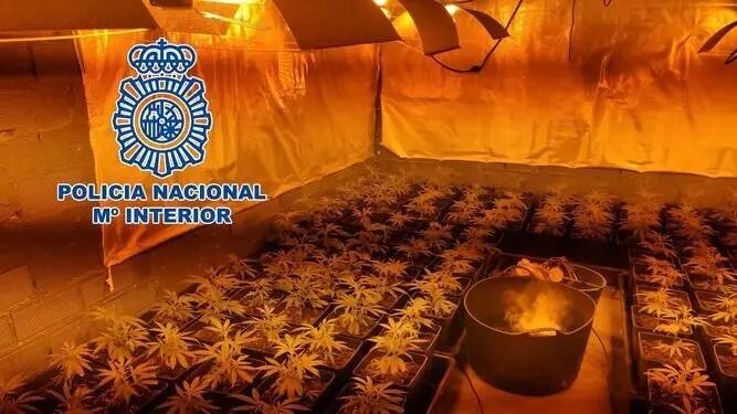 Weed plantation found in La Linea warehouse that made 300 kilos a month- ESPANA NEWS