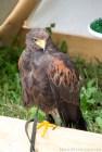 block06_owls1