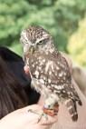 block06_owls3