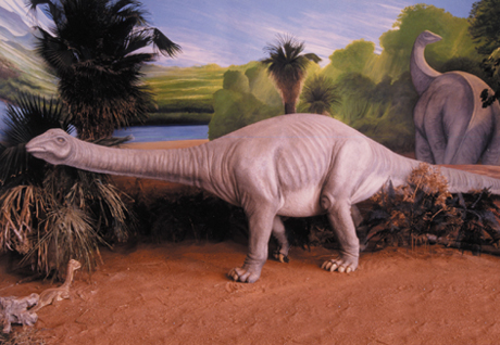 © Museum d'Histoire Naturelle d'Aix en Provence - http://www.museum-aix-en-provence.org/fiche_titanosaure.htm