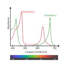 ©https://fr.wikipedia.org/wiki/Chlorophylle#/media/File:Chlorophyll_ab_spectra-fr.svg