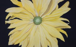 Yellow Daisy Oil Painting