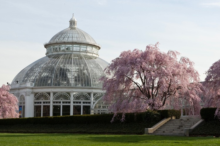 Enid Haupt Conservatory at the New York Botanical Garden, home to the annual orchid show