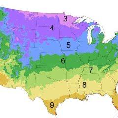 Spring Detour:  Plant Sales
