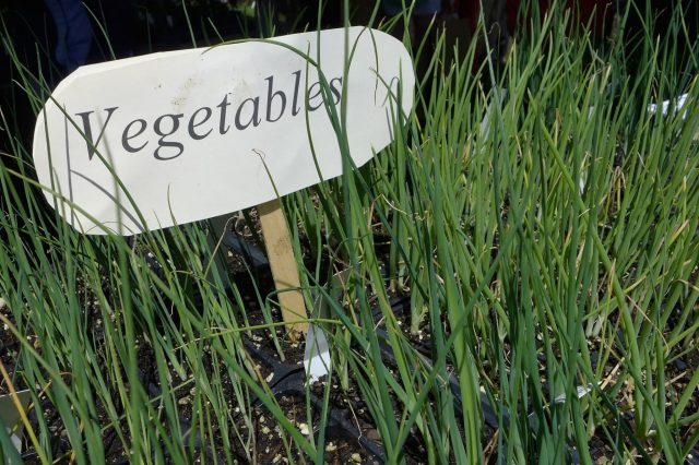 Many of the garden antiques were spectacularly expensive, but there was a large selection of annuals, perennials, and vegetables, many of them from certified organic farms like Markristo Farm.