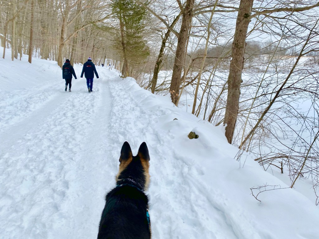 dog on snow covered trail at Rockefeller State Park Preserve, a winter hiking spot near NYC