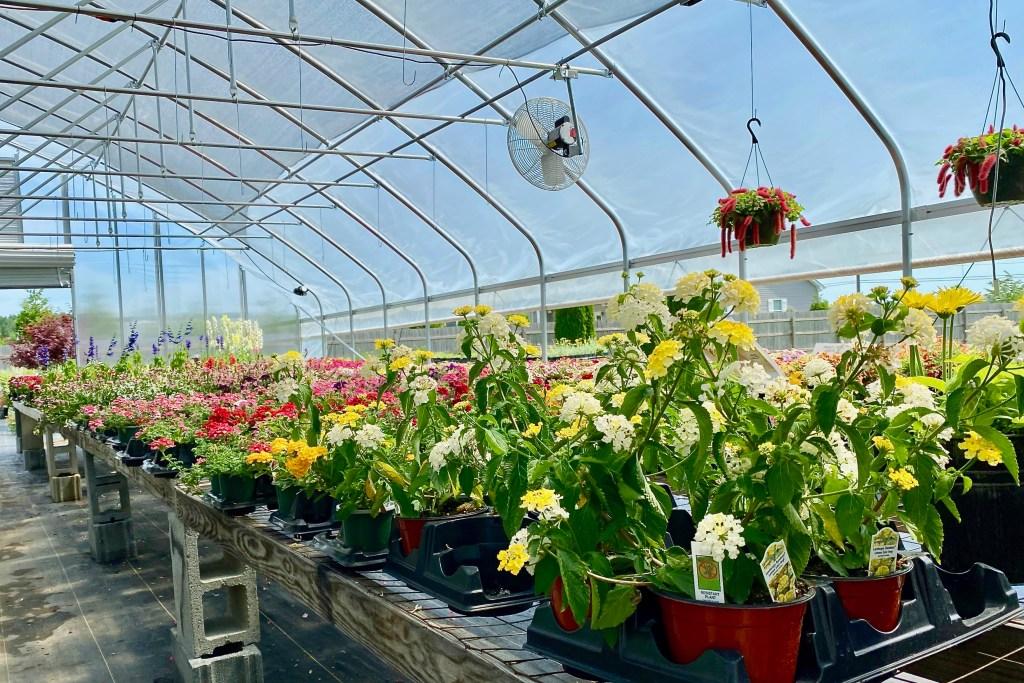 Colorful plants in a garden nursery in Delaware.