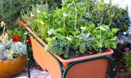 How to Plant a Raised Bed Herb Garden! : Recipes Using Herbs