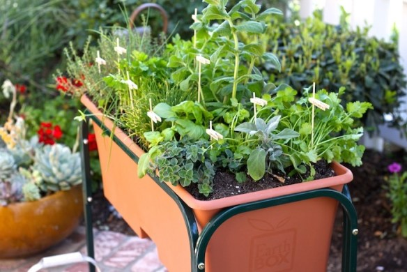 Planting a Raised Bed Herb Garden