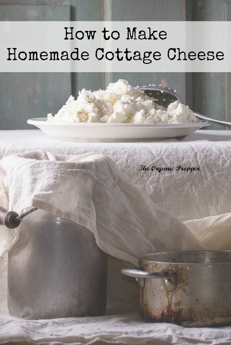 Homemade cottage cheese is creamy, fluffy, and delicious, and it\'s made with only 3 simple ingredients. | The Organic Prepper