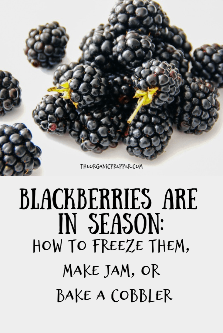 Blackberries are in season! Here are some facts about this nutrient-packed, versatile fruit - and some tasty ways to eat them now or preserve them for later! | The Organic Prepper