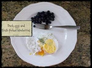 eggs and berries