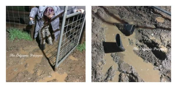 Mud Collage