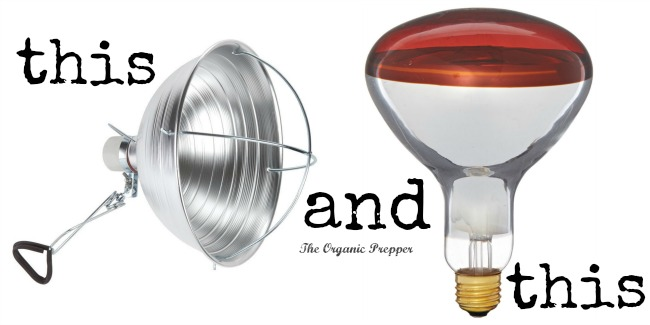 heat lamp and bulb