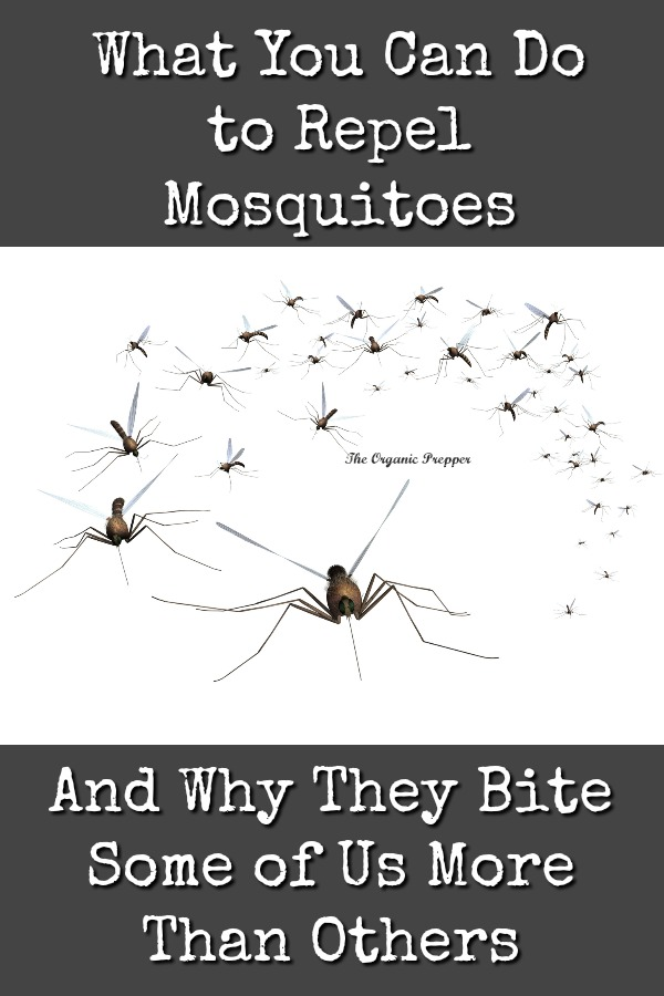 What You Can Do to Repel Mosquitoes (And Why They Bite Some of Us More Than Others)