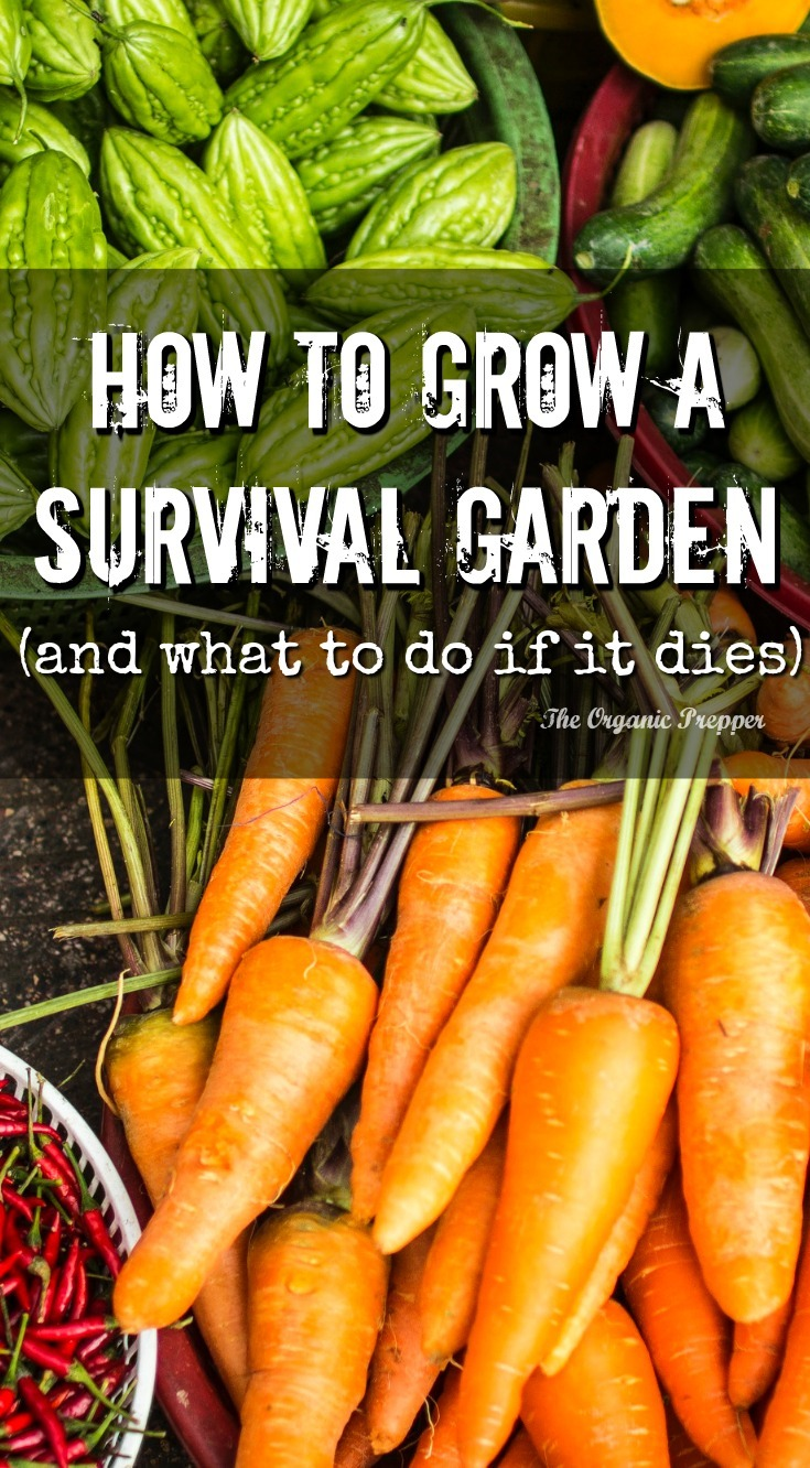 While growing your own food is a very important part of a long-term self-reliance plan, there are some years that your garden just won't grow.