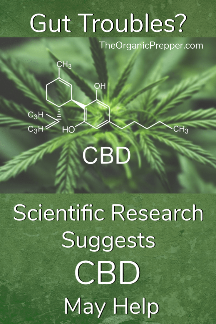Got Gut Troubles? Research Suggests CBD May Help