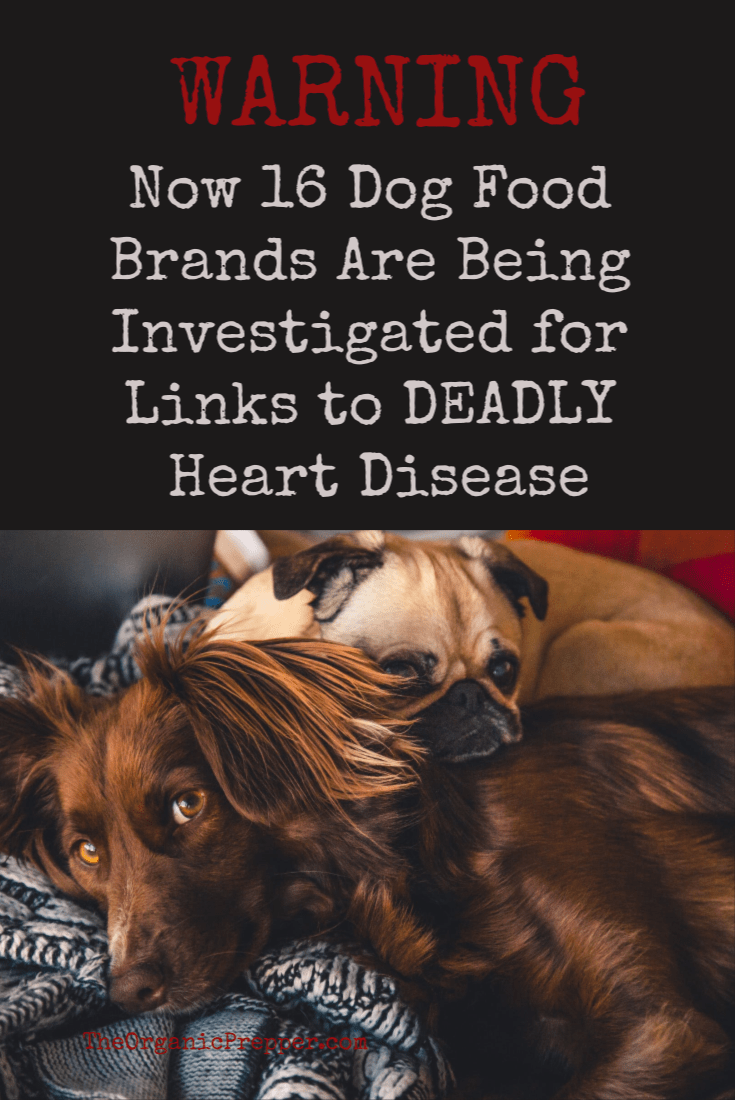 WARNING - 16 dog food brands are being investigated for their potential link to a DEADLY heart disease among dog breeds not prone to the ailment. | The Organic Prepper
