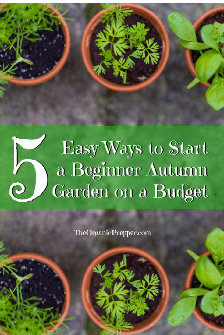 Starting an autumn garden isn\'t only for the experienced gardener. Here are 5 easy tips to help you get started even if you\'re a complete beginner. | The Organic Prepper
