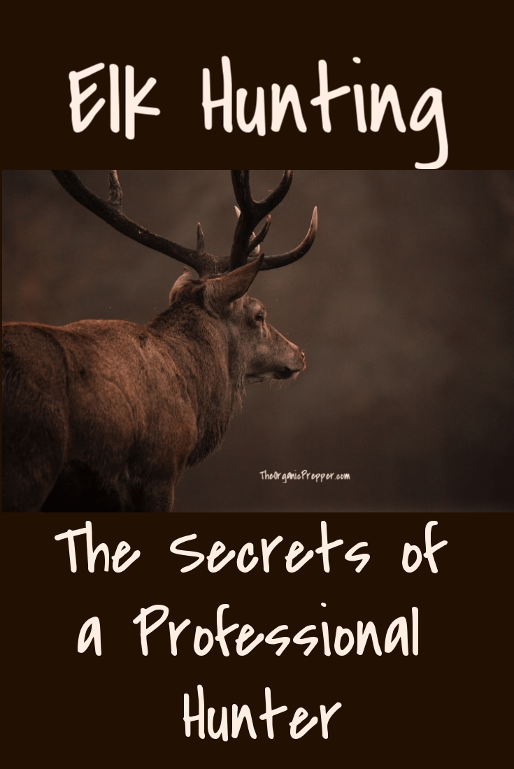 Elk Hunting: The Secrets of a Professional Hunter