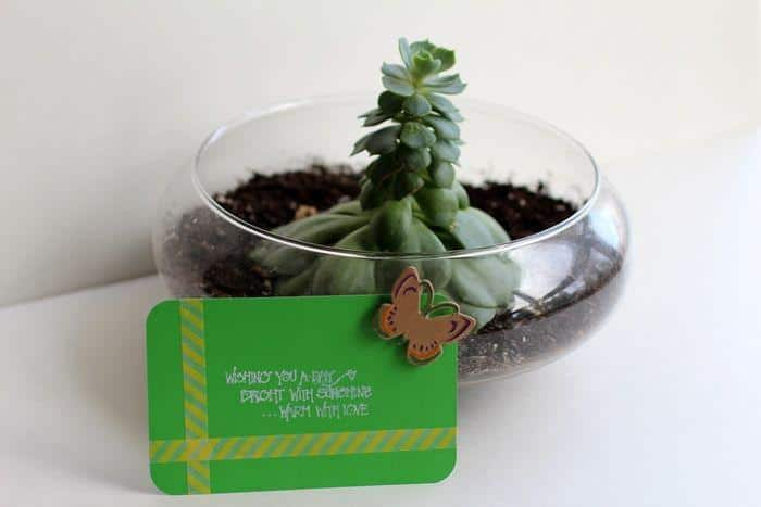 b2ap3_thumbnail_Plant-Gift.jpg