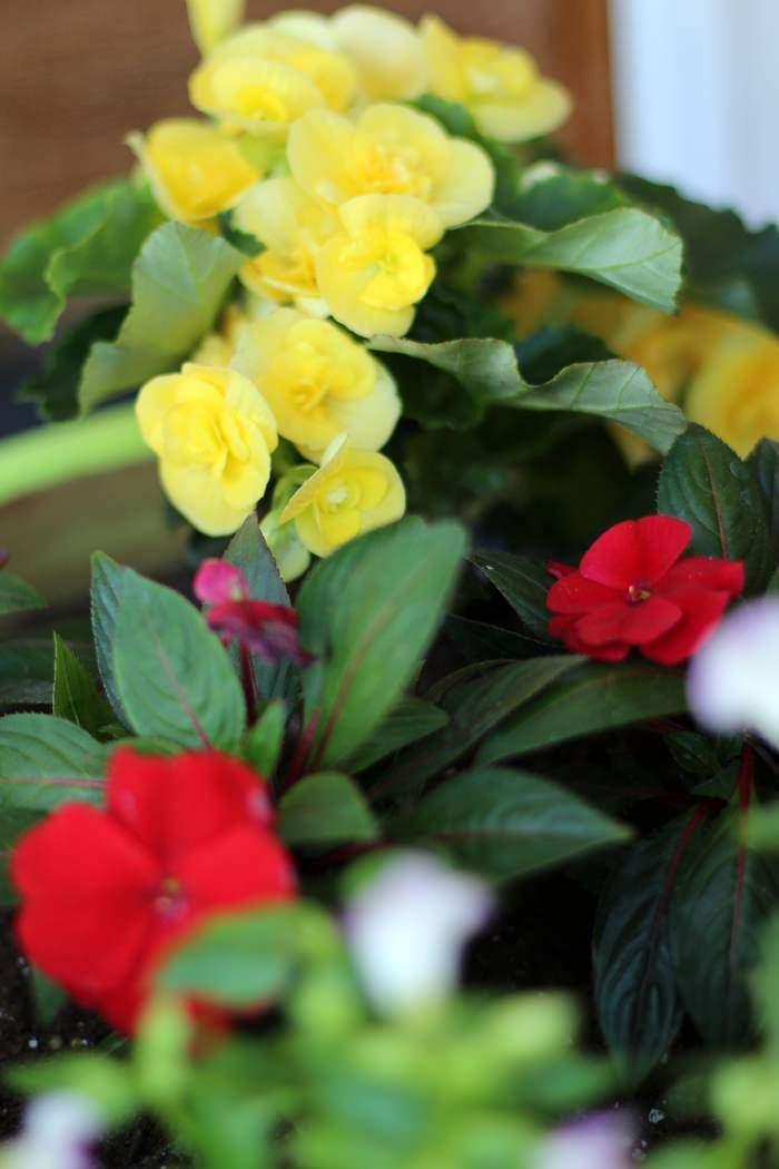 DIY Chalk Paint Terra Cotta Planters - Flowers In Planter