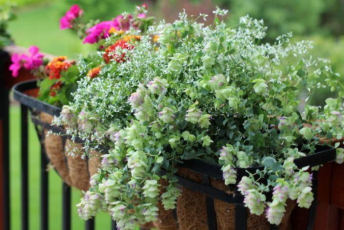 Setting Up A Patio - Deck Flower Boxes