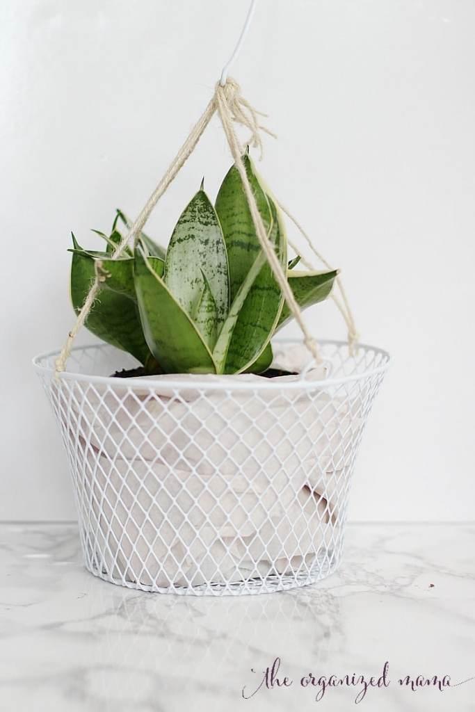 indoor plant hanger with dollar store supplies