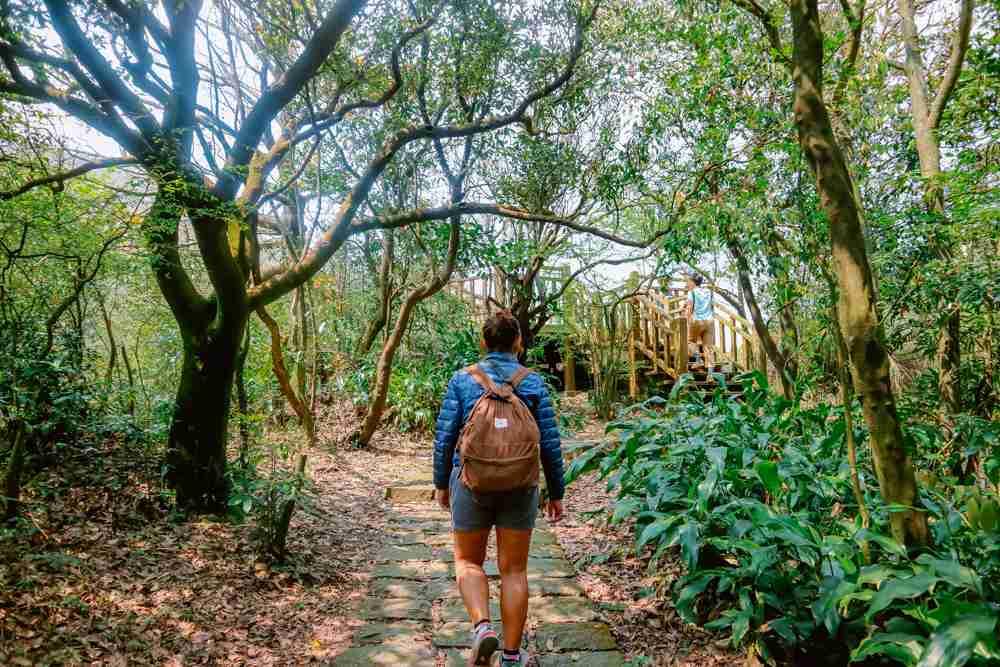 moss trees in Yangmingshan National Park Taiwan