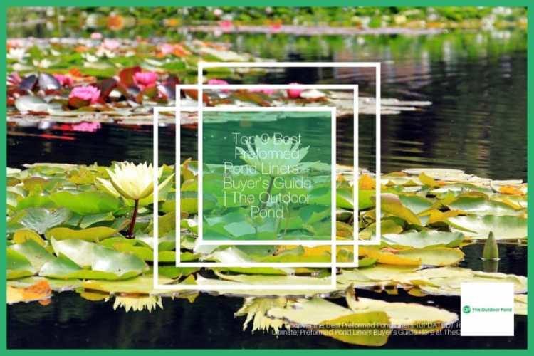 Top 9 Best Preformed Pond Liners for Garden & Fish ponds