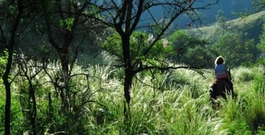 The lush countryside of Cordoba