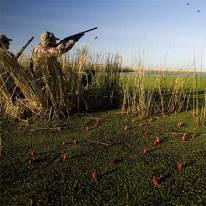 Dove Shooting