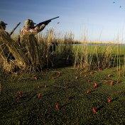 Game bird shooting