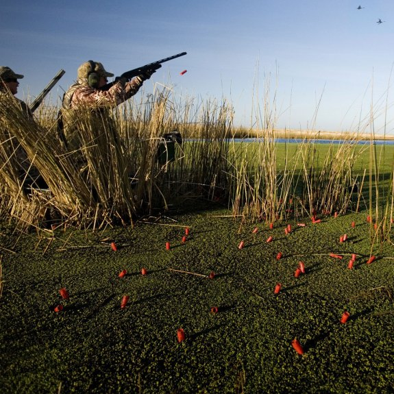 Game bird shooting