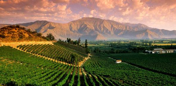 The Mendoza Wine Region