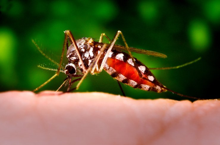 The little insect that does so much damage