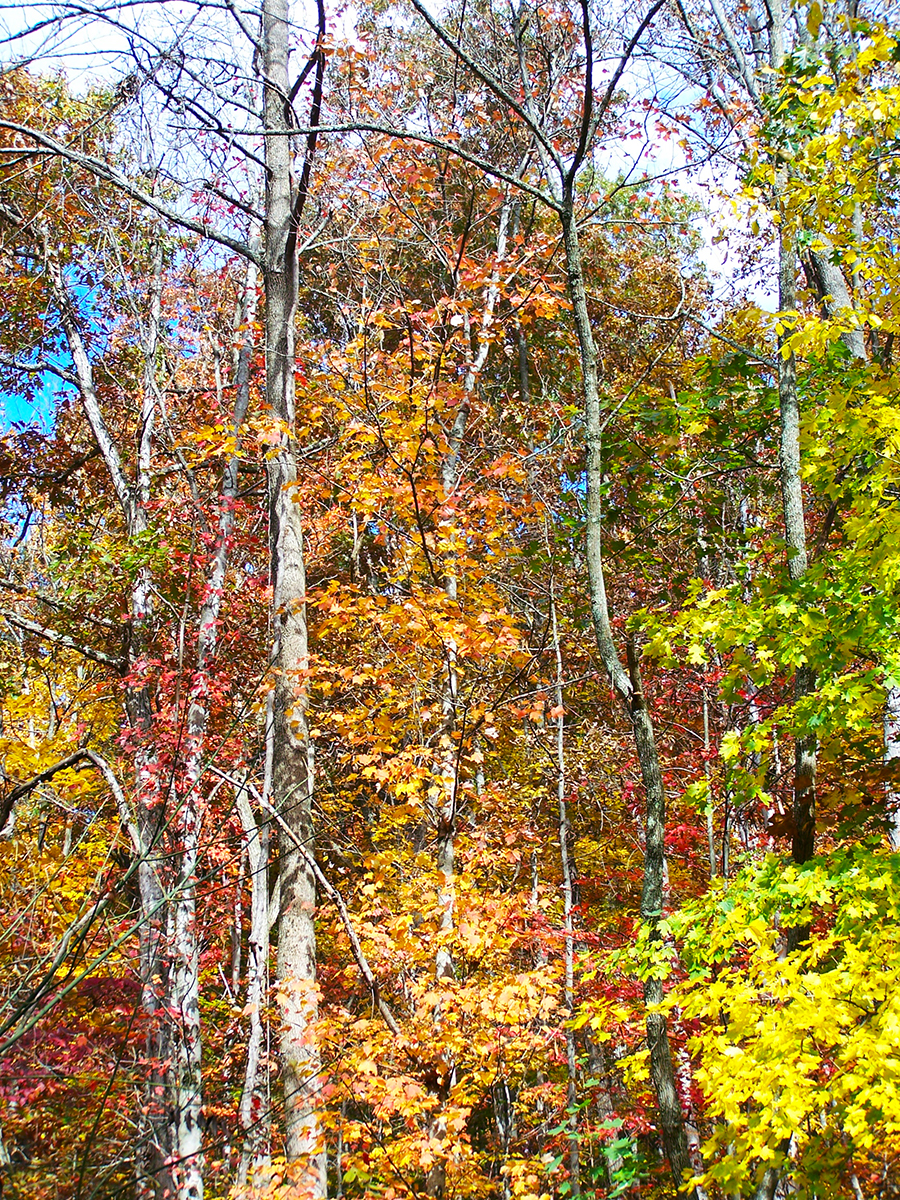 fall color trees leaves Ohio forest woods countryside autumn October November pretty beautiful stunning colorful falling tree woodlands places outside travel