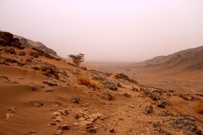SaharaMorning2