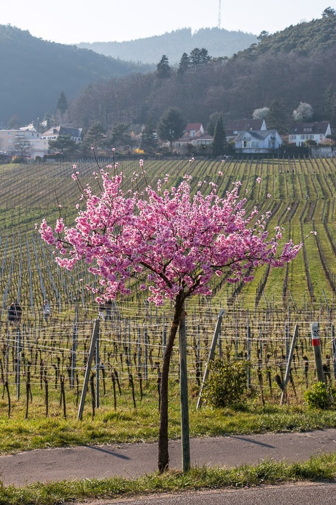 Wine-Country-25