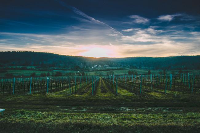 Wine_Walk_BadDurkheim-1