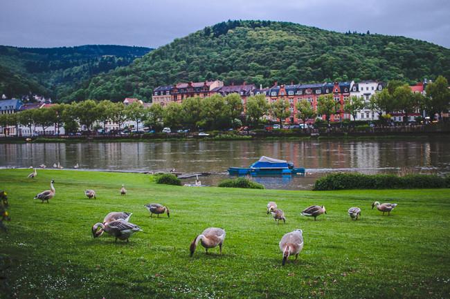 Heidelberg Germany-28