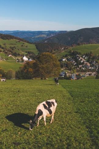 Freiburg, Germany - The Overseas Escape-7