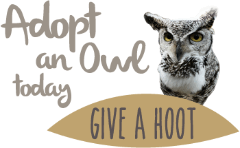 Adopt an owl today
