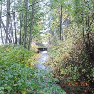 Chuckanut Drive Creek