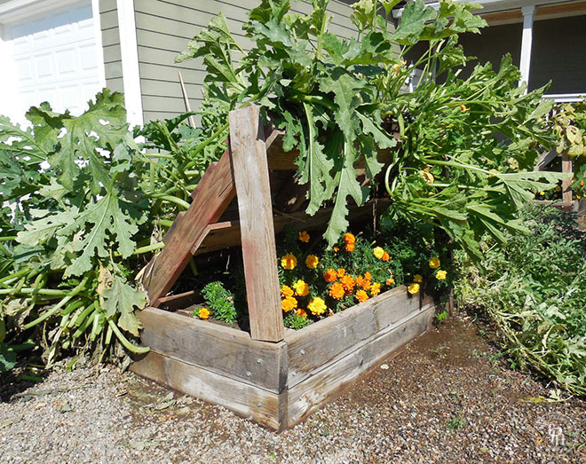 Squash Growing Racks Made From Pallets