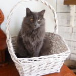 7 Tips for Keeping the Peace in a Multi-Cat Household