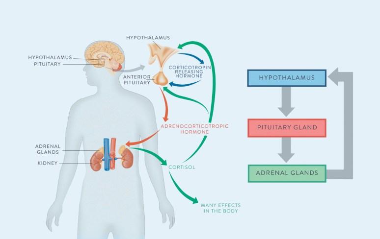 https://www.thepaleomom.com/adrenal-fatigue-pt-1/