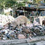 Haiti 2013 112