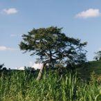 Haiti 2013 194