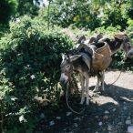 Haiti 2013 276